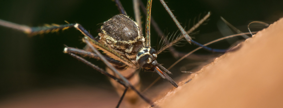 Simple safety measures to protect against malaria